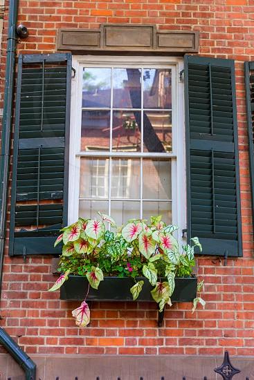 West Village in New York Manhattan flowers window facades USA NYC photo
