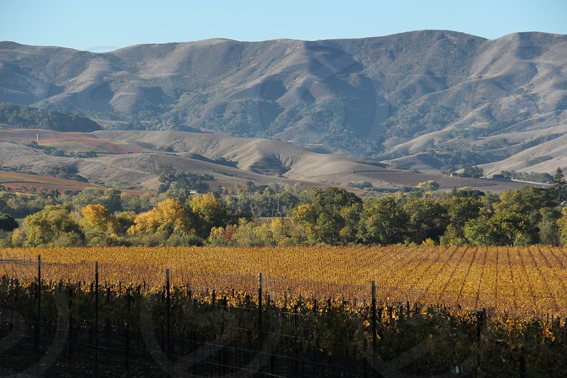 Vineyards of the Santa Ynez Valley.  vineyard grapes wine country wine trail mountains autumn panorama photo