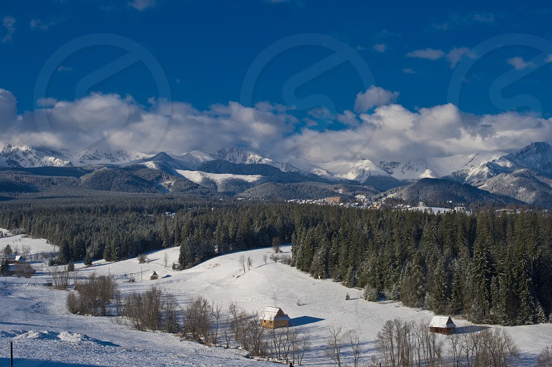 white snow on hills with pine trees photo