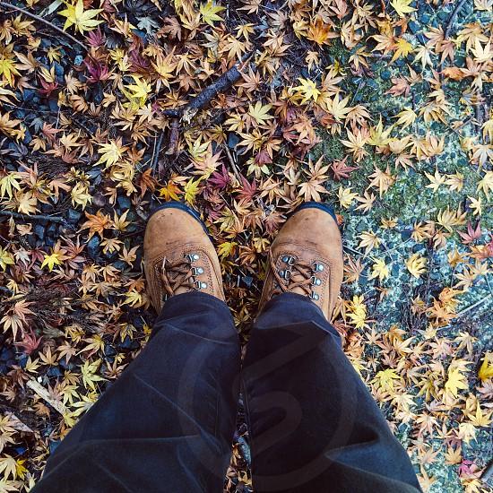 落葉の彩。 photo