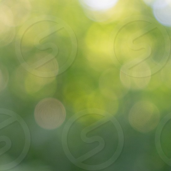 Green colorful natural blurred background of green leaves in a garden with bokeh circles. photo