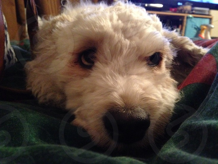 Dog up close photo