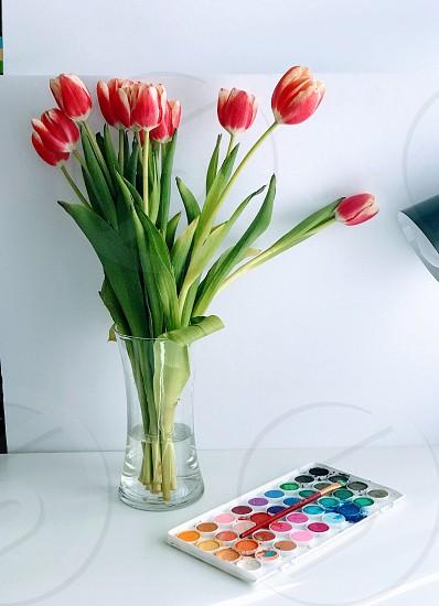 Pallet colors vibrant flowers photo