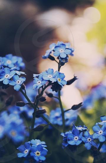 blue flower plant photo
