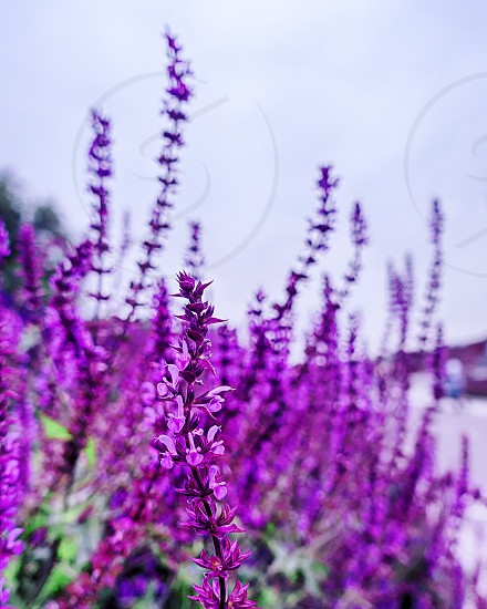 Flowers at Muzeon park photo