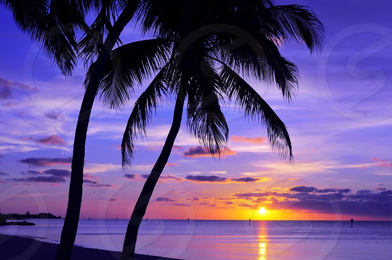 silhouette of coconut palm trees on seaside during sunset photo