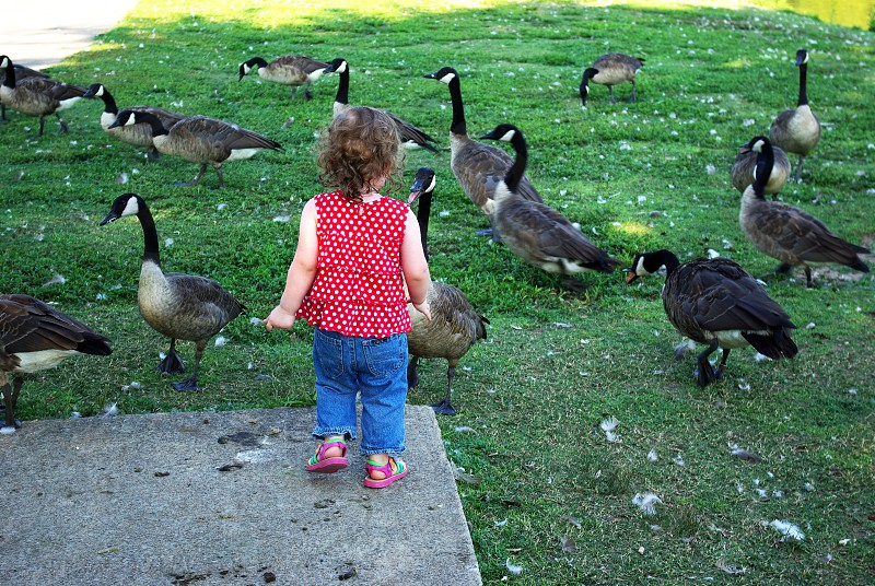 feeding geese at the park photo