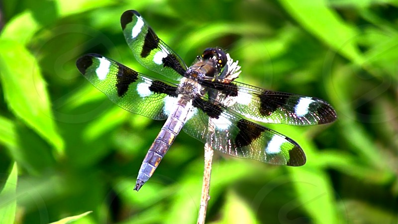 dragonfly nature kiss... photo