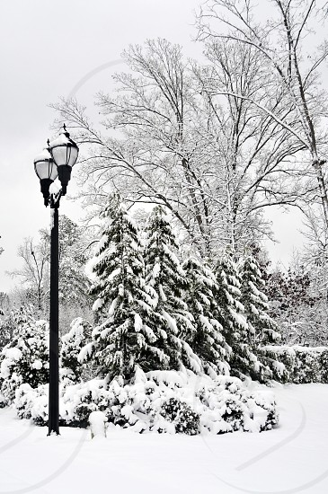 Street lamp and trees in the snow photo
