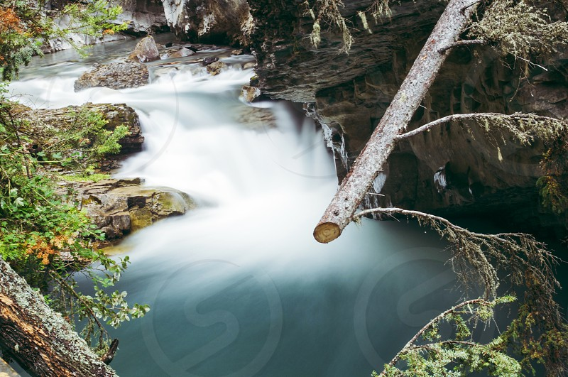 tree branch near flowing river photo