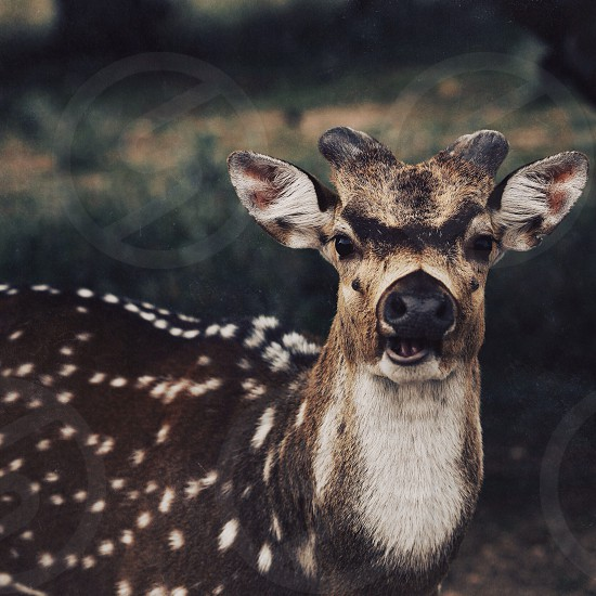 white and brown spotted animal photo
