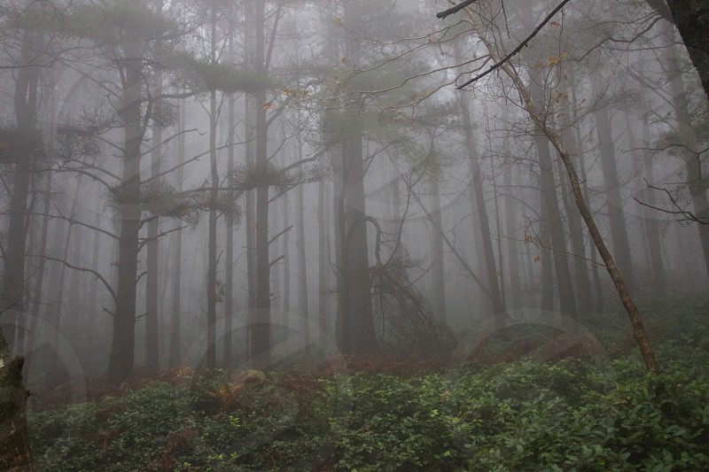 forest in mist photo