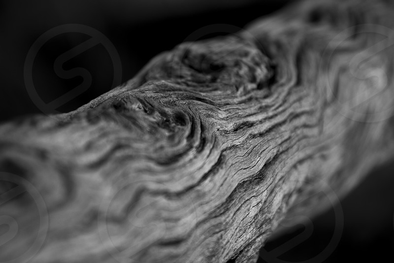 black and white photo of tree branch photo