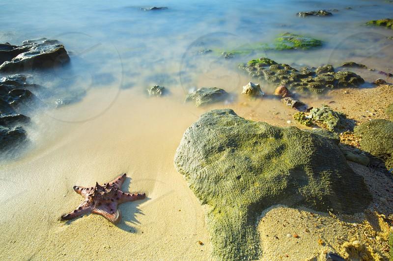 starfish sea beach rock blue bright landscape summer sand vacation life photo
