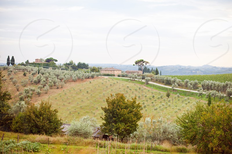 italy florence landscape vineyard  photo