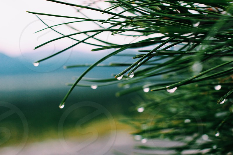 focused photography of green leaf with raindrops photo