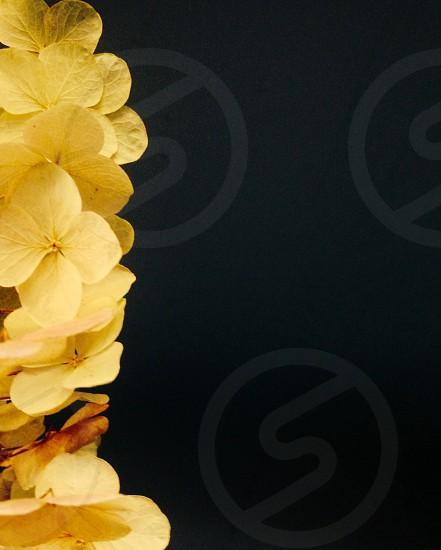 Rule of thirds flowers oak hydrangea photo