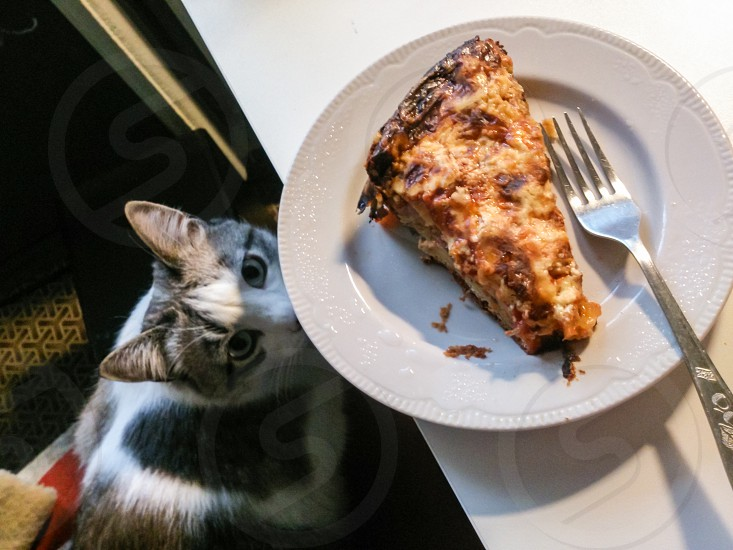 My cat hunts my breakfast. photo