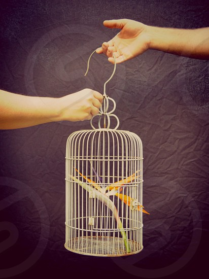 yellow and orange bird of paradise flower in silver cage photo