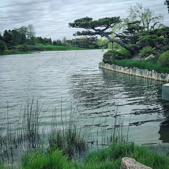 Nature peaceful water environment  photo