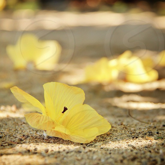 yellow flower macro photography photo