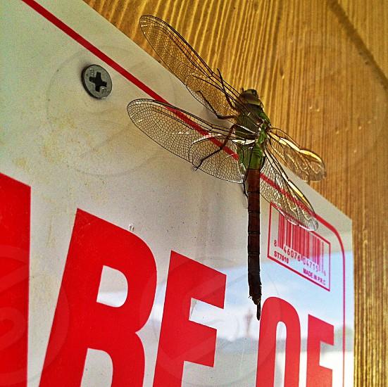 Dragon Fly - Close Up🐉 photo