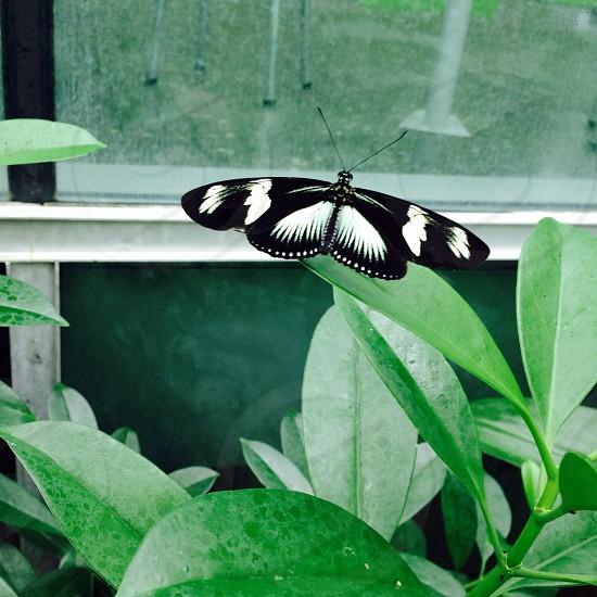 Amsterdam Zoo - Butterfly Garden photo