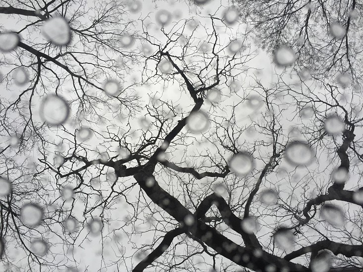 clear water droplets under bare trees photo