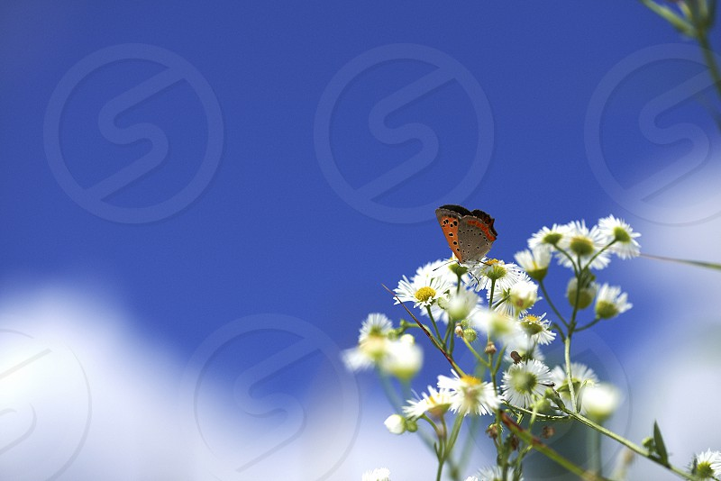 Very small flowers and butterflies that are native photo