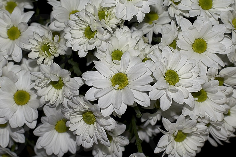 many white flowers close up in the shop photo