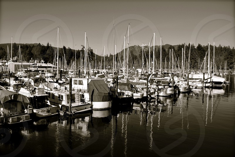 Marina boats sailboats boating yachts sailor sail away hobby lifestyle Canada Vancouver British Columbia landscape scenic outdoors come sail away majestic water ocean harbors tropical mountains nature  photo