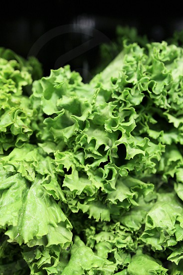 green vegetable lettuce leafy vegetables fresh organic food farmer's market  photo