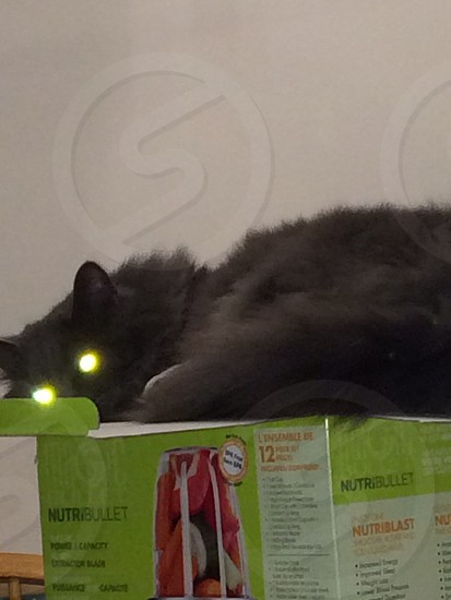 Alien Cat photo