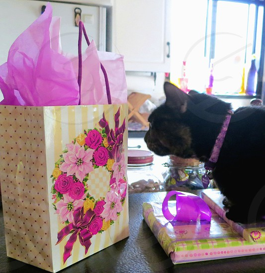 Black cat inspecting colorful gifts photo