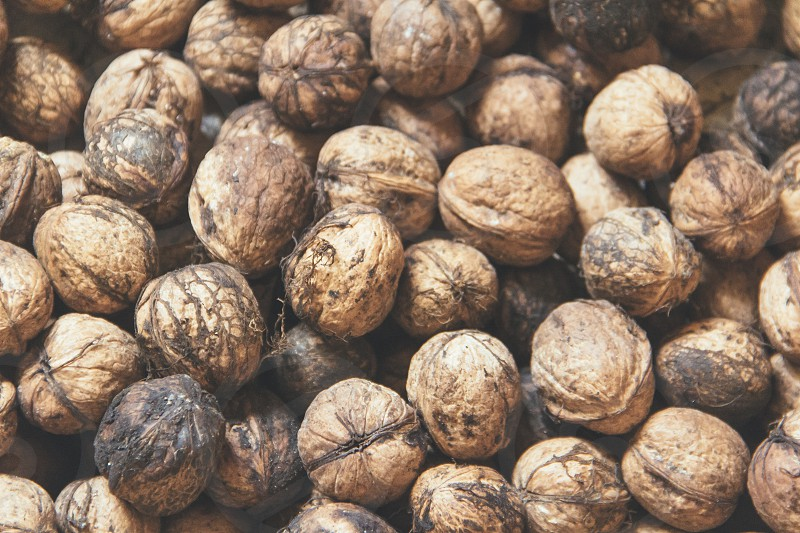 walnuts nuts photo
