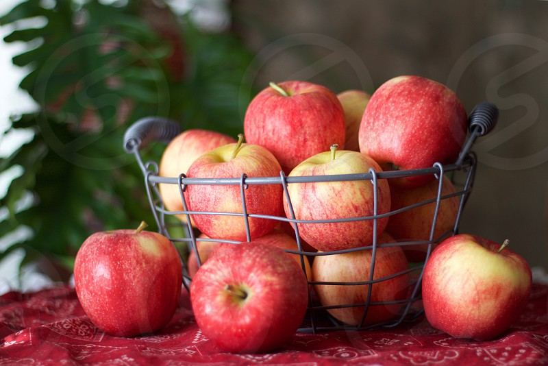 Gala apples in a wire basket on a red bandana-patterned tablecloth photo