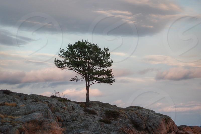 green tree near rock formation photo