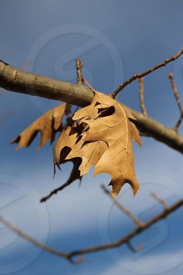 Dead leafs.  photo