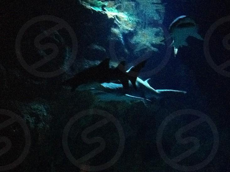 Sharks; aquarium; Sea Life  photo