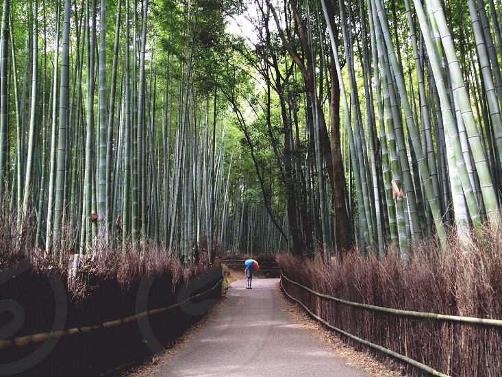 pathway near green tall trees photo
