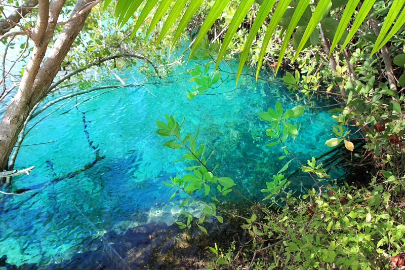cenote mangrove clear turquoise water Mayan Riviera Mexico photo