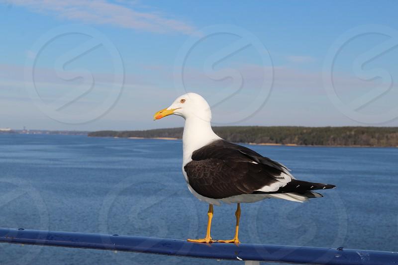 Cruise seagull ship travel  photo
