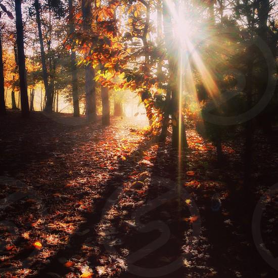 Forest sunrise  photo