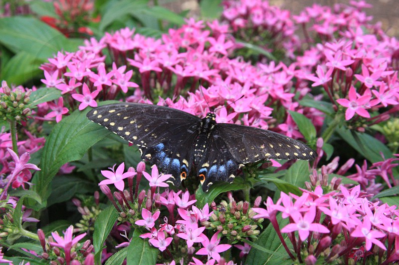 green leaf plant with pink flower and black butterfly photo