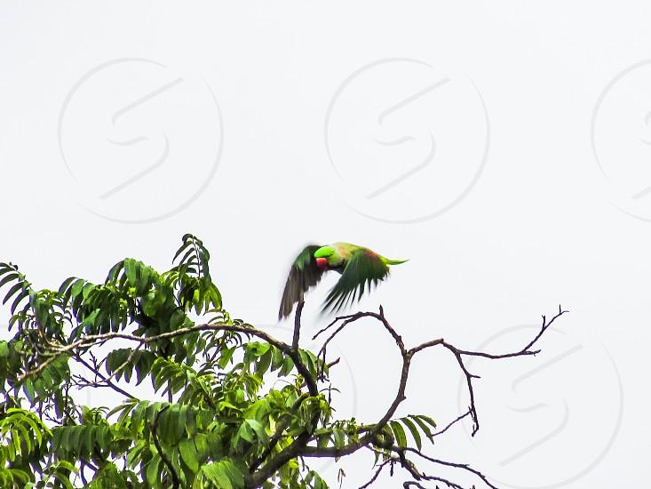 Everywhere Birds photo