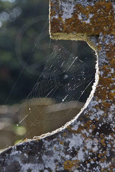 Spider's web on a gravestone photo