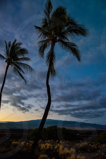 palm trees sky tranquility peace calm relax Hawaii Big Island coast mountain clouds desert photo