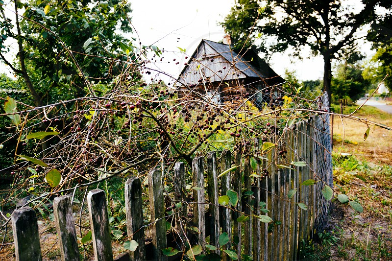 Poland countryside  photo