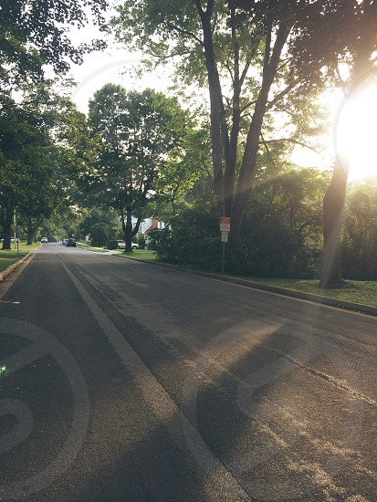 gray asphalt road in between green leafed trees during daytime photo