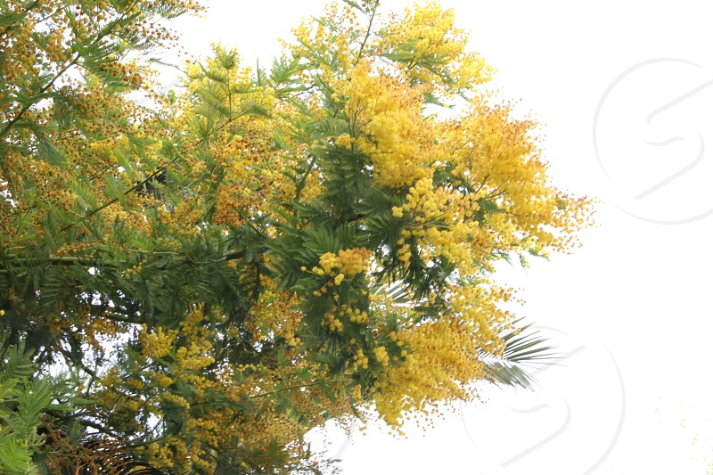 yellow leafed tree photo